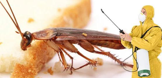 كيفية التخلص من الصراصير المنزلية وايجاد حلول لها