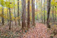 """Path Thru the Poplars,"" photography"