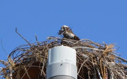 Nest building 9