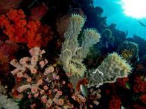 Terumbu Karang (Coral Reef)
