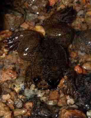 Kondisi Amfibi di Indonesia