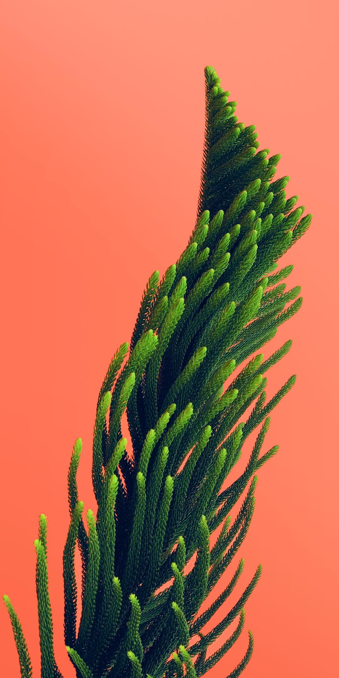 Plants Pinterest Wallpapers