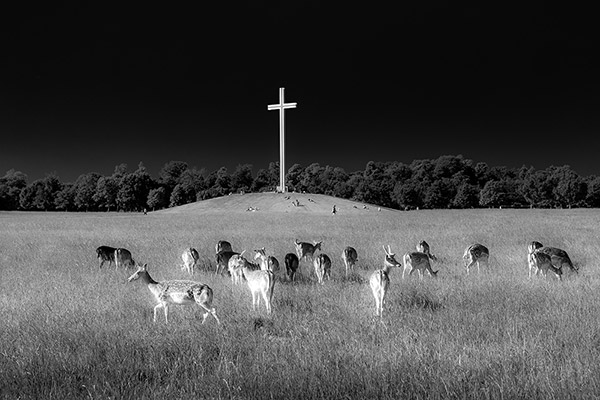 Deer in black and white at Phoenix Park, Dublin, Ireland- Fine Art Print