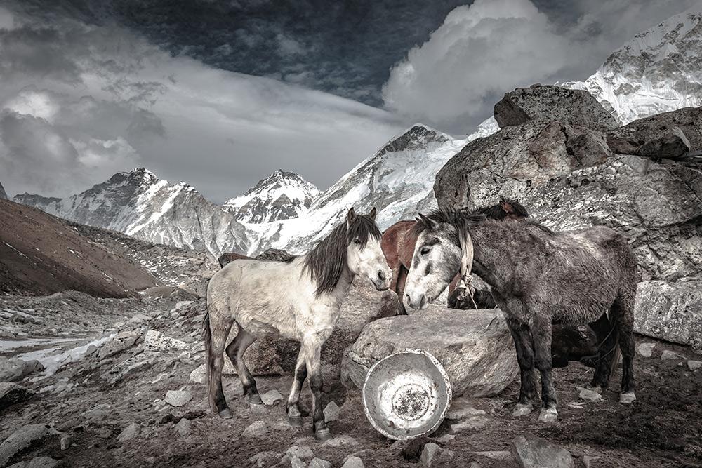 Horses at Basecamp, Mount Everest, Nepal - Fine Art Print
