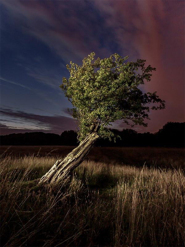 Phoenix Park Tree in the dark - Dublin - Landscape Photography