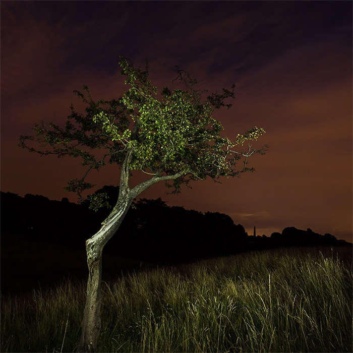 The Tree and the Darkness #2