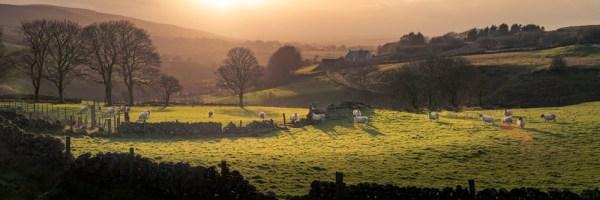 Sheep in the hills near Cargan, Ballymena, Northern Ireland
