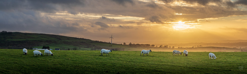 Sheep in Antrim hills - panoramic print