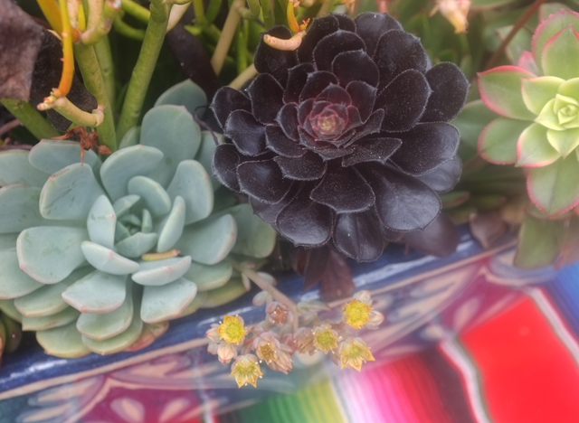 sd succulent box