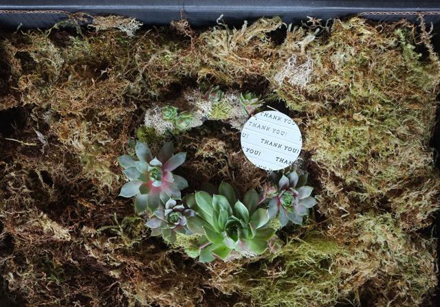 succulent wreath gift box