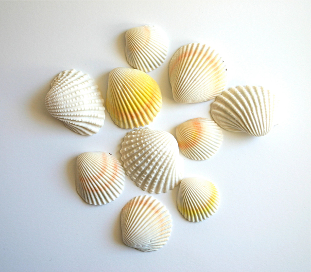 chocolate filled clam shells