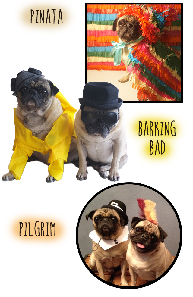 Dog Costumes2