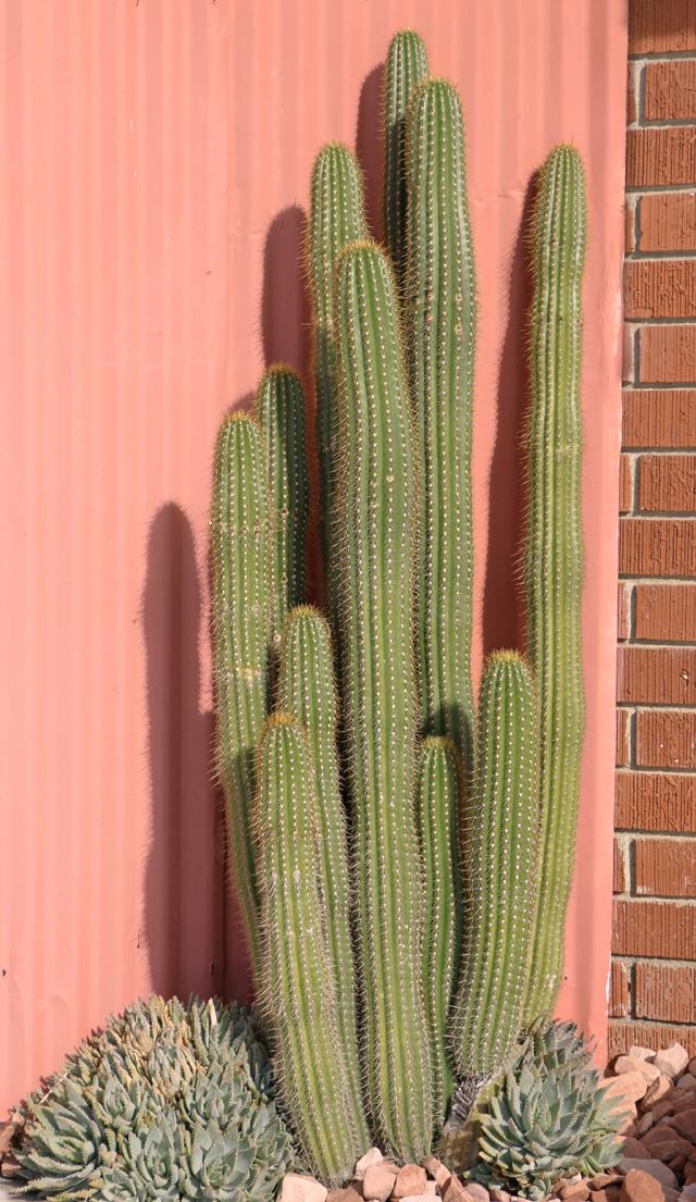 Desert Color copy