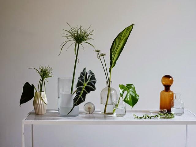 houseofc-elledecoration-greenhouse-2