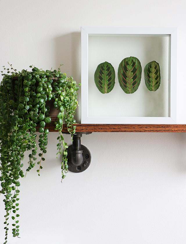 Pressed Plant Frame