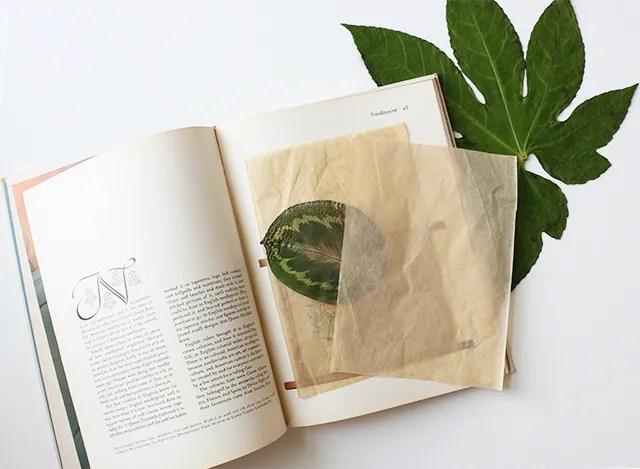 Pressed Plants DIY