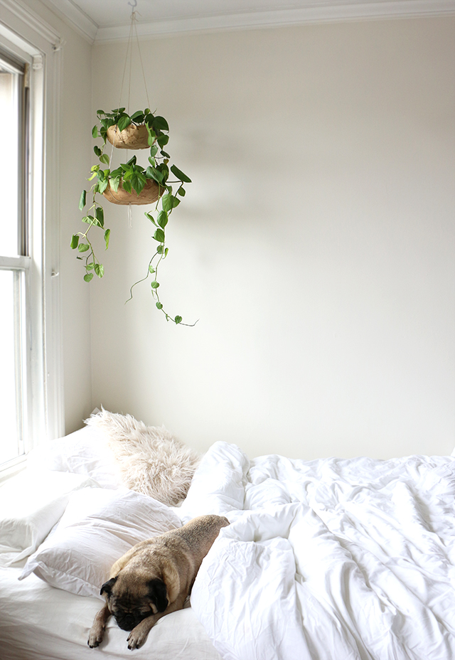 Hanging Bedroom Planter