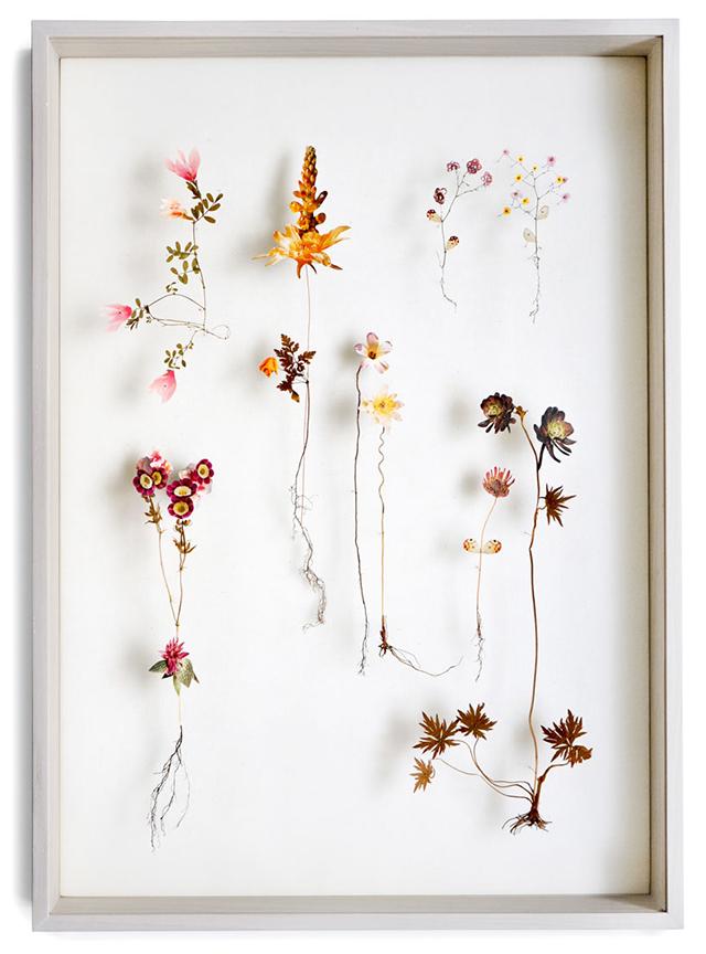 anne-ten-donkelaar-5-flower-constructions