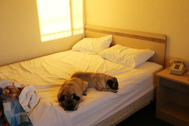 Pug Motel
