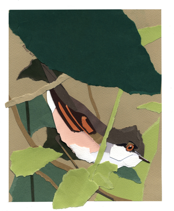 whitethroat-in-the-nettles2-sm-collage-may-2015