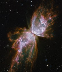 "This celestial object looks like a delicate butterfly. But it is far from serene. What resemble dainty butterfly wings are actually roiling cauldrons of gas heated to nearly 20 000 degrees Celsius. The gas is tearing across space at more than 950 000 kilometres per hour — fast enough to travel from Earth to the Moon in 24 minutes! A dying star that was once about five times the mass of the Sun is at the centre of this fury. It has ejected its envelope of gases and is now unleashing a stream of ultraviolet radiation that is making the cast-off material glow. This object is an example of a planetary nebula, so-named because many of them have a round appearance resembling that of a planet when viewed through a small telescope. The Wide Field Camera 3 (WFC3), a new camera aboard the NASA/ESA Hubble Space Telescope, snapped this image of the planetary nebula, catalogued as NGC 6302, but more popularly called the Bug Nebula or the Butterfly Nebula. WFC3 was installed by NASA astronauts in May 2009, during the Servicing Mission to upgrade and repair the 19-year-old Hubble. NGC 6302 lies within our Milky Way galaxy, roughly 3800 light-years away in the constellation of Scorpius. The glowing gas is the star's outer layers, expelled over about 2200 years. The ""butterfly"" stretches for more than two light-years, which is about half the distance from the Sun to the nearest star, Proxima Centauri. The central star itself cannot be seen, because it is hidden within a doughnut-shaped ring of dust, which appears as a dark band pinching the nebula in the centre. The thick dust belt constricts the star's outflow, creating the classic ""bipolar"" or hourglass shape displayed by some planetary nebulae. The star's surface temperature is estimated to be over 220 000 degrees Celsius, making it one of the hottest known stars in our galaxy. Spectroscopic observations made with ground-based telescopes show that the gas is roughly 20 000 degrees Celsius, which is unusually hot compared to a t"
