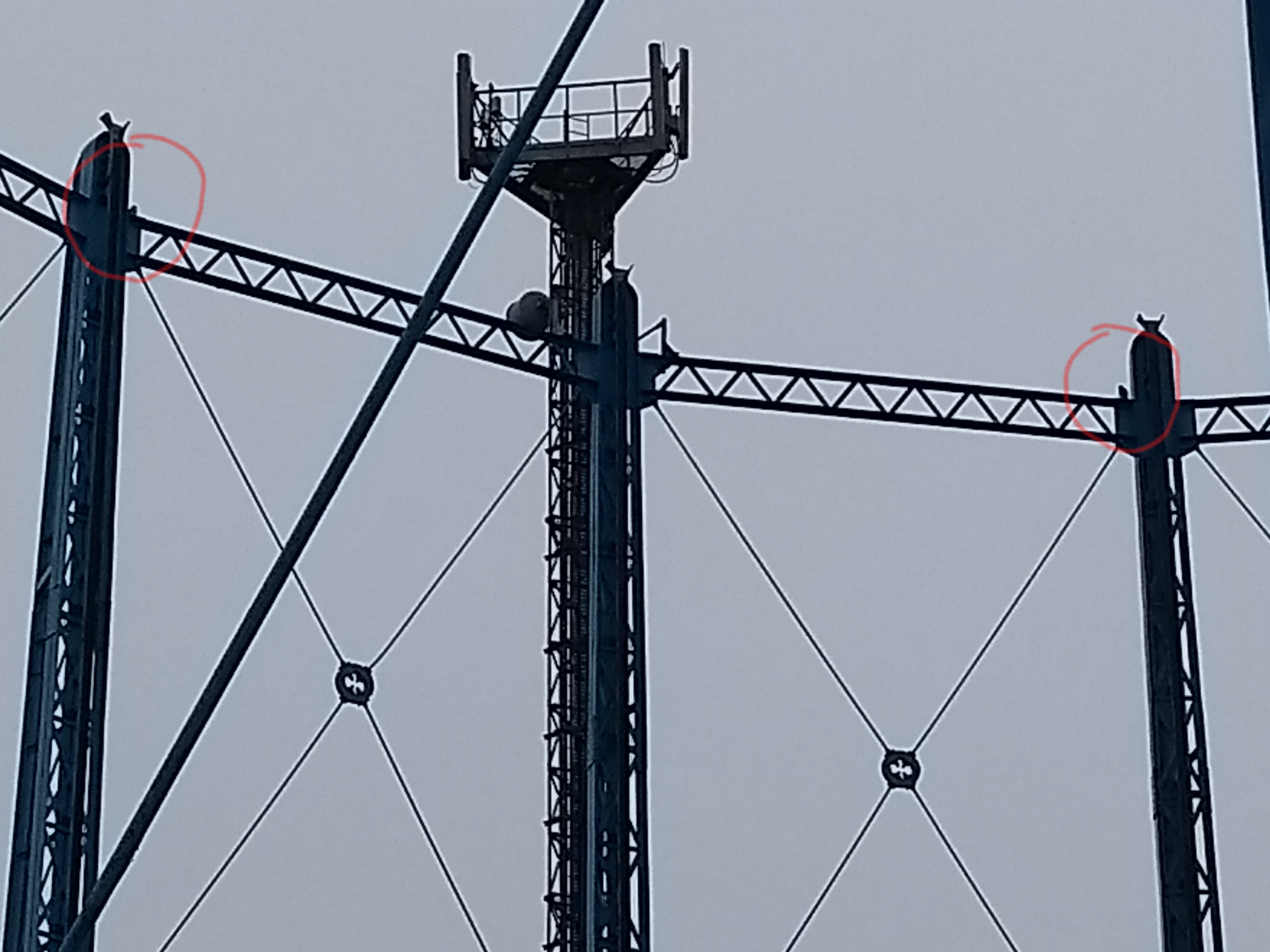 Peregrine Falcons at Bell Green Gas Holders 180408 no1