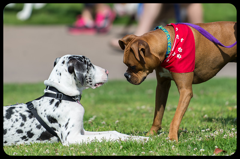 San Diego Humane Society – Walk for the Animals