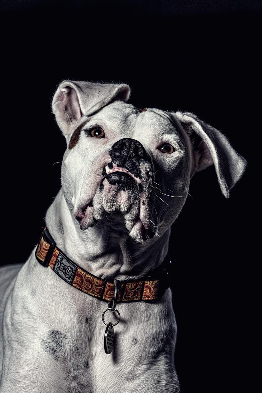 puppyblog2