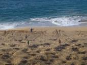 Raking the beaches