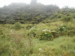 ferns behind the invasives