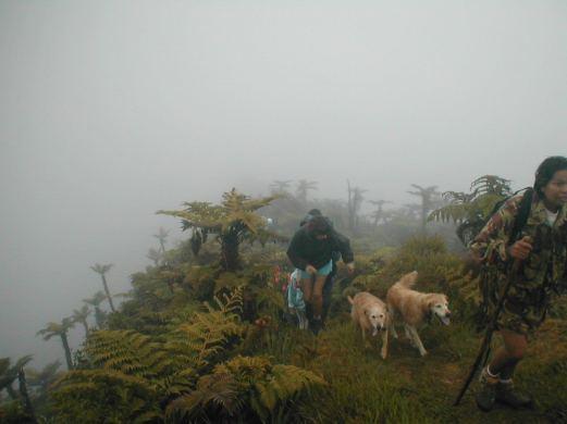 Ferns in the mist