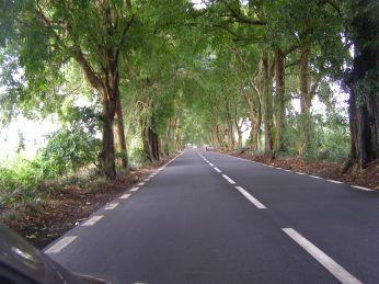 The shady main roads in amongst plantation fields