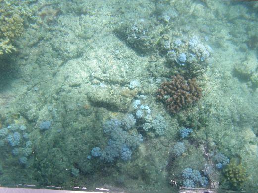More coral