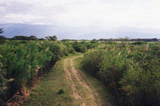 In the Ruzizi Delta