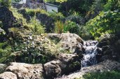 Andromeda Gardens 3