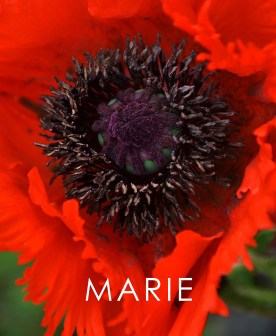 """'Marie"""" - Book cover"""