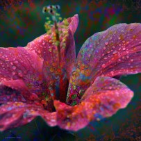 Ornate Hibiscus