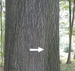 an arrow attached to a tree