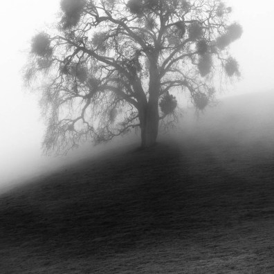 California Oak & Fog I – Grant Ranch, CA