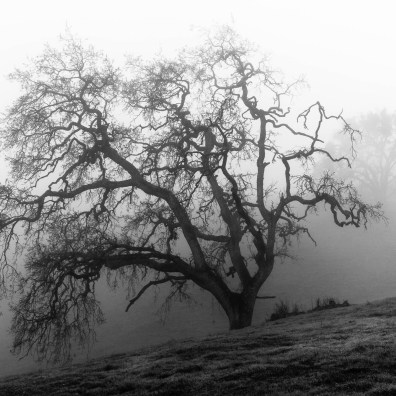 California Oak & Fog II – Grant Ranch, CA