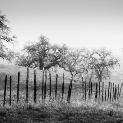 Fence Line – Grant Ranch, CA