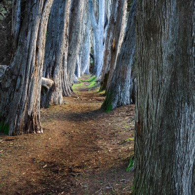 Cypress Grove – Sea Ranch, CA