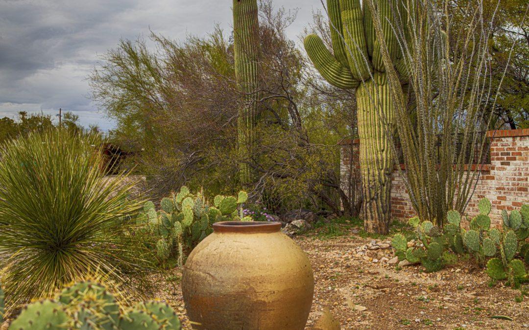 My Move to Tucson