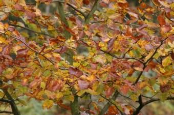 autumn-colours3