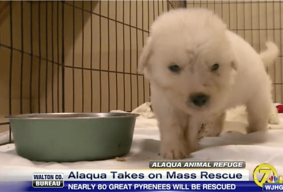 Alaqua Takes on Mass Rescue