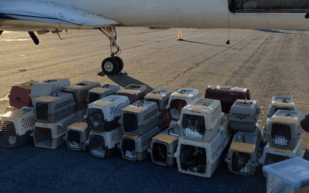 173 Feline Refugees from Michael Flown to Washington