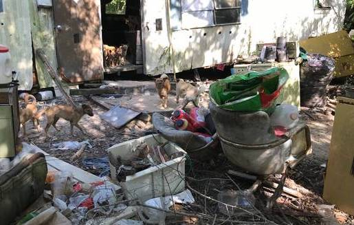 32 Dogs Seized in Suspected Hoarding Case, Taken to Nearby Refuge