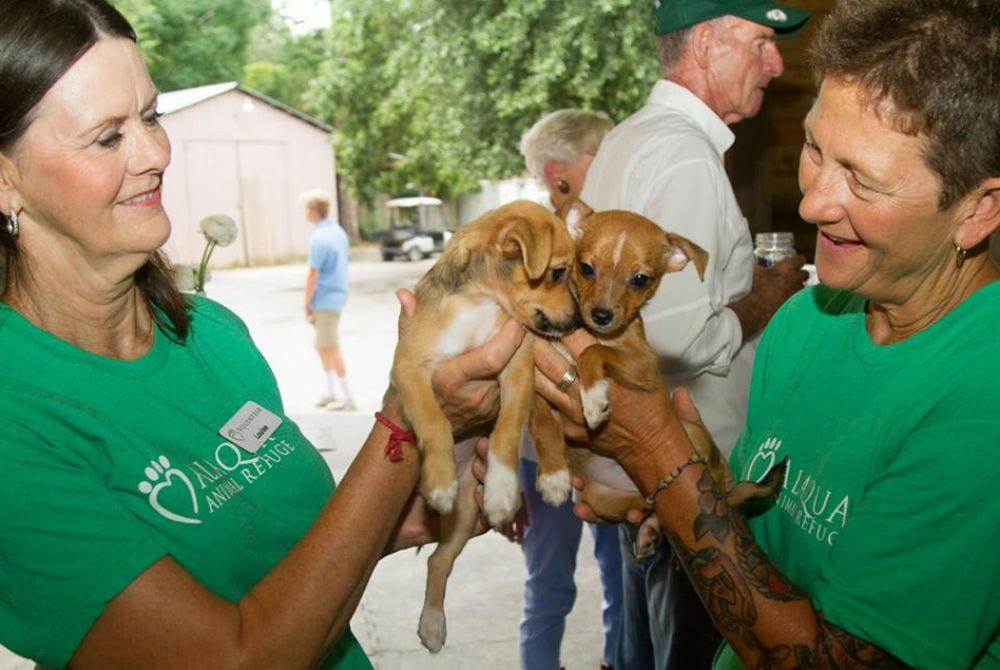 30A Stickers Raise Record Amount for Alaqua Animal Refuge