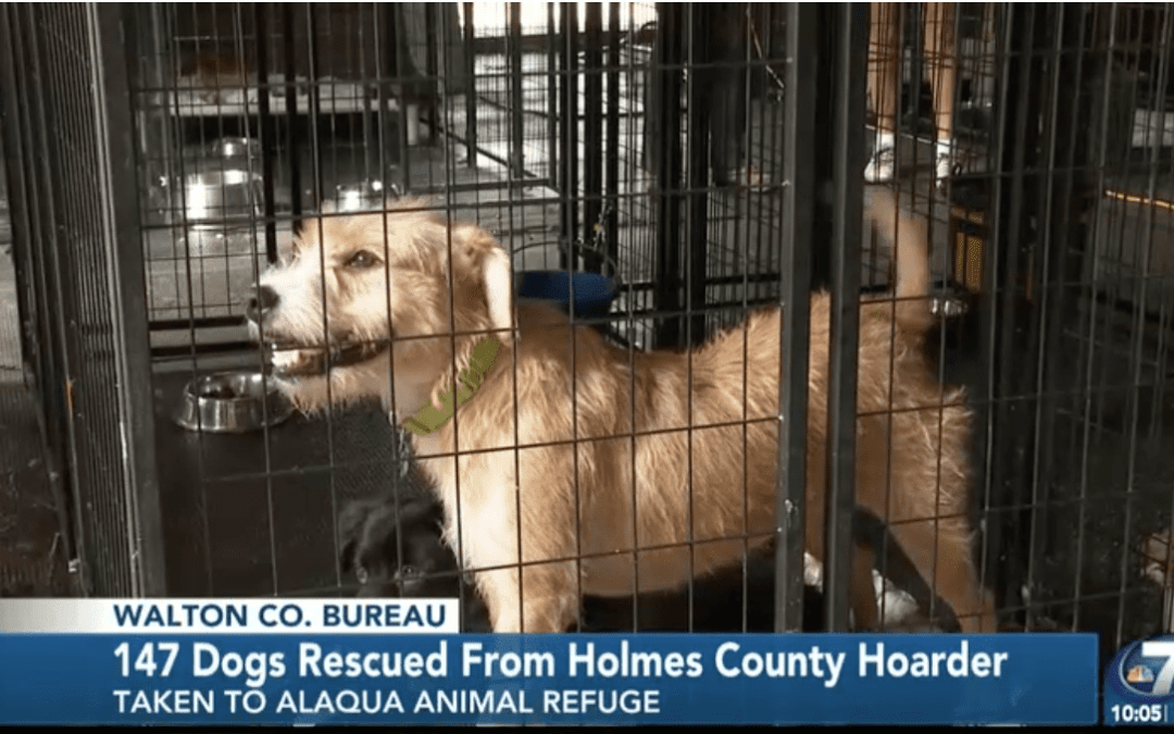 147 Dogs Rescued, Now Being Sheltered at Alaqua Animal Refuge