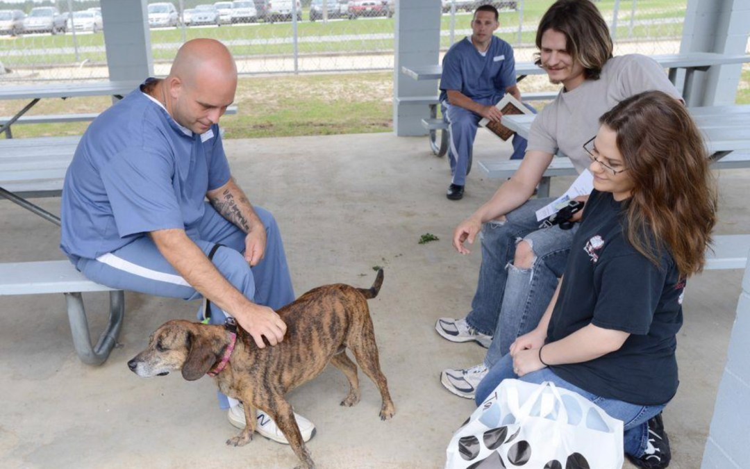 VIDEO: Inmates from Walton Correctional Institution train dogs from Alaqua Animal Refuge to help make them more adoptable.